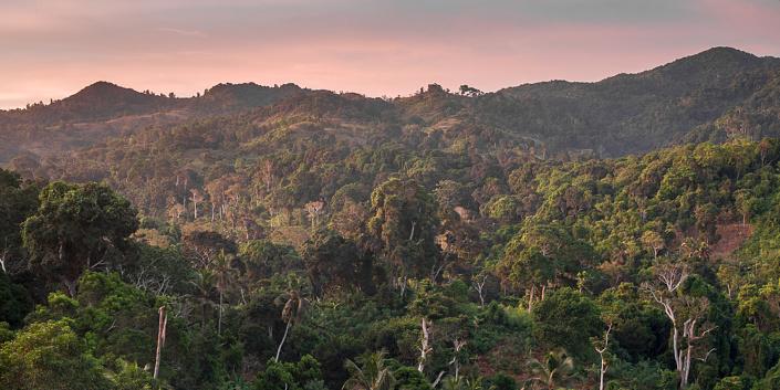 Paysage de forêt à Mayotte