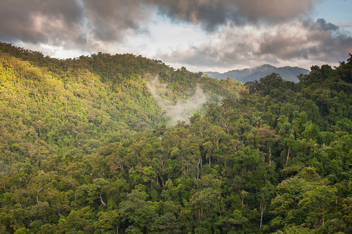 Canopée, parc national de Masoala, Madagascar