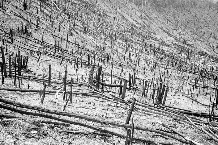 Deforestation au Laos